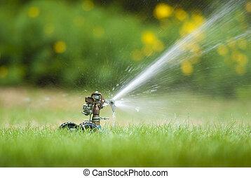 sprinkler, gräsmatta