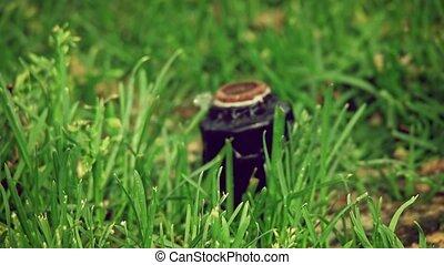 Sprinkler head in slow motion - Sprinkler head in the lawn...