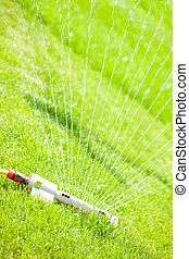Sprinkler head watering lawn - Close up of a sprinkler head...
