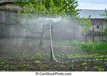 Sprinkler in a potato field