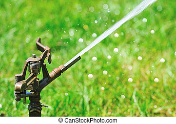 sprinkler in action