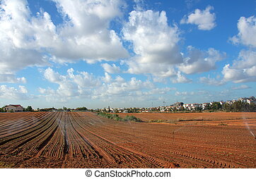 Sprinkler irrigated newly planted field with blue sky and clouds - crops growing on fertile farm land in Israel