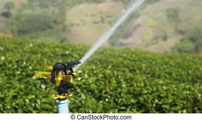 Sprinkler Irrigating Tea Bushes on Chiang Mai Plantation. ...