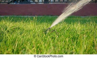 Sprinkler irrigation. Sprinkler system working on lawn
