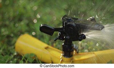 sprinkler., jardin, foyer., sélectif, bas, contraste
