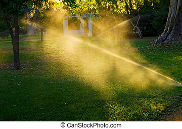 sprinkler of automatic watering grass and sunlit by sunset sun