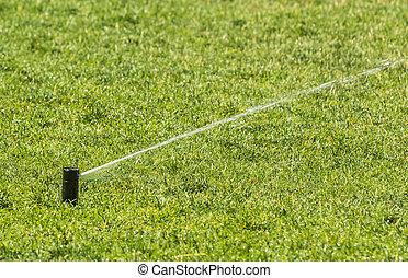 sprinkler of automatic watering.