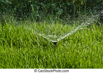 Sprinkler Water