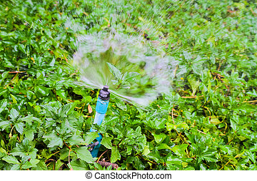 Sprinkler water working in the garden.