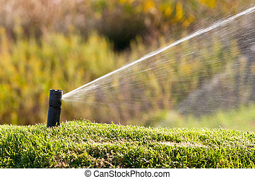 Sprinkler watering a lawn during a sunny day