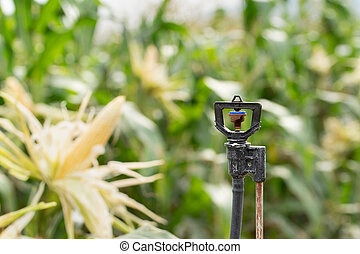 Sprinkler in high tube for field planted with corn