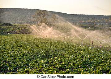 Sprinkler watering crops in field