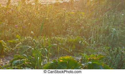 Sprinkler waters lush flower bed a