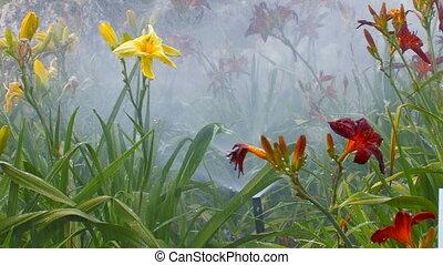 Sprinkler waters lush flower bed