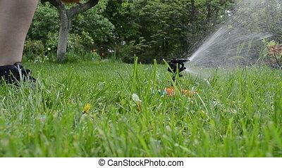 sprinkler woman hose - Gardener woman unplug water hose from...