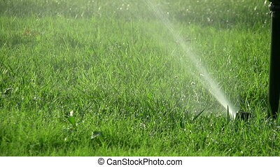 Sprinklers in the garden