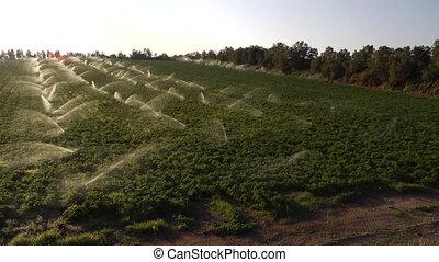 sprinklers operate in a field