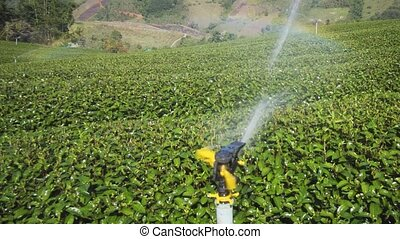 Sprinklers provide much needed water for the tea fields on this rural, hillside plantation in Chiang Mai, Thailand. FullHD video with sound