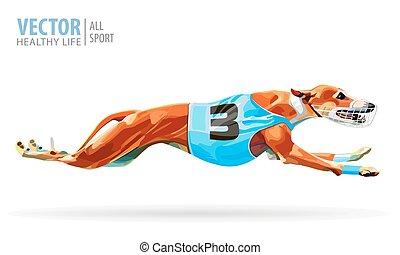 sprinting, racing., racetrac, cão, greyhounds., sport., animal., track.