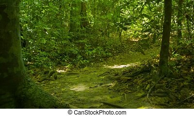 Sprinting through the rainforest along the path. First-person view