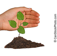 sprout and hand as a symbol of nature protection