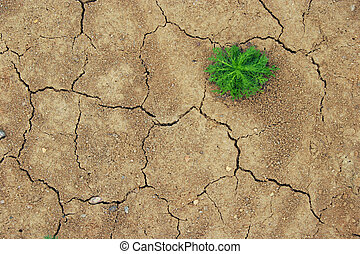sprout dry ground