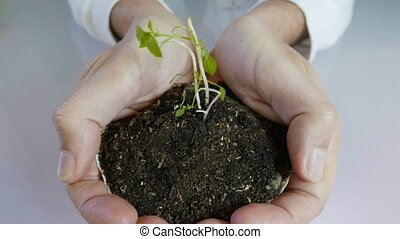 Young Sprout in Soil Being hold by Business Man