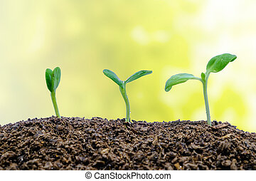 Sprout growing from soil on blurred natural background