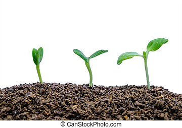Sprout growing from soil on white background