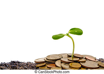 Sprout growing from soil with money coins on white background
