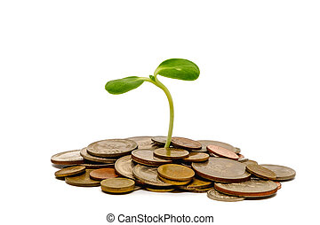 Sprout growing on coins on white background