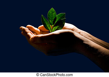 Image of sprout in the human hands on a dark-blue background