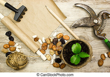 Sprout in a pot, garden tools on wooden table