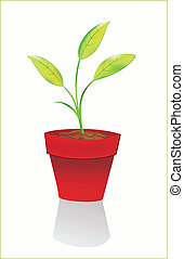Sprout in the flowerpot