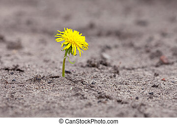 Young sprout makes the way through sand