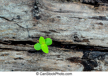 Sprout on the old wood