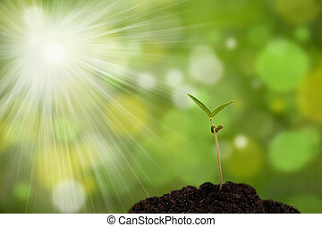 sprout - sapling in the ground on a green background with ...