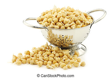 sprouted chick peas in a metal colander on a white ...