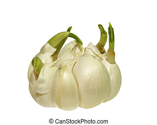 Sprouted garlic, object white isolated