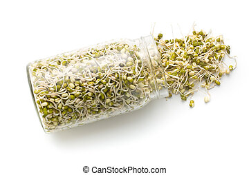 Sprouted mung beans in jar