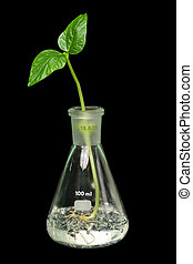 Sprout,flask - Flask with sprout. Isolated on black [with...