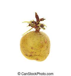 sprouting, aardappel
