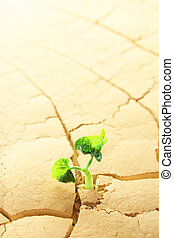 sprouting, plant, woestijn