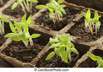 sprouting, plants34