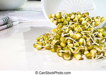 Sprouting Seeds - adzuki, beans, food, fresh, mung, seeds,...