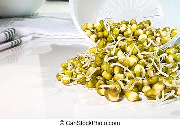 Sprouting Seeds - adzuki, beans, food, fresh, mung, seeds,...