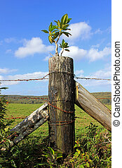 Sprouting tree from fence post - Small tree growing out of a...