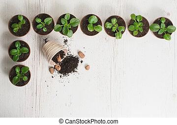 Sprouts indoor plants in pots