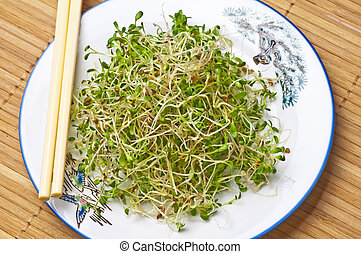 sprouts of different vegetables