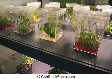 Sprouts of various plants sprout in containers Agriculture